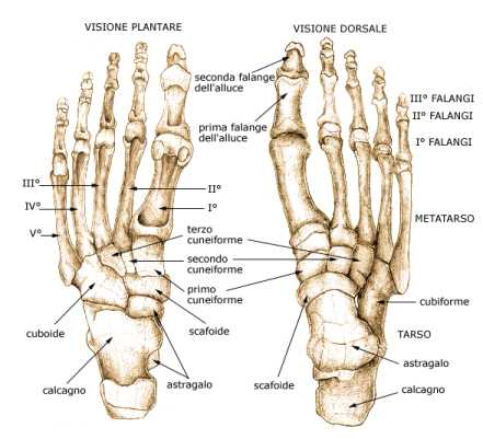 piede-ossa