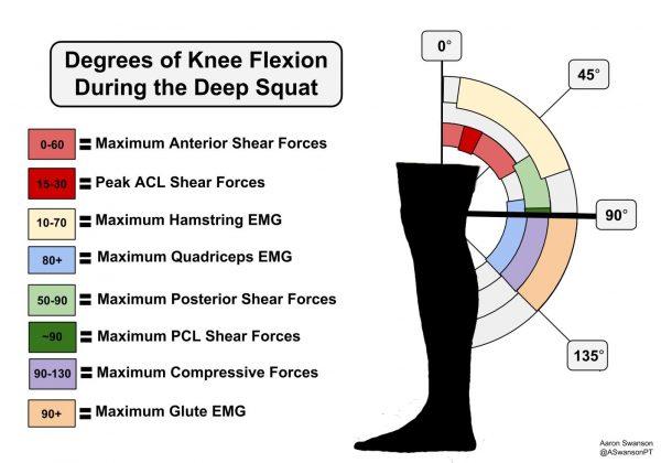 forze nello squat profondo