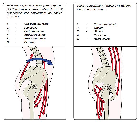 analisi-posturale-bacino