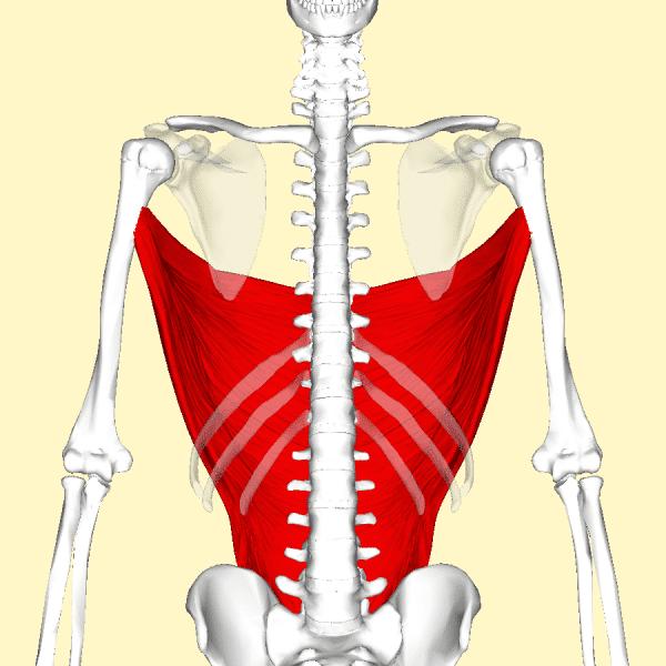 gran dorsale