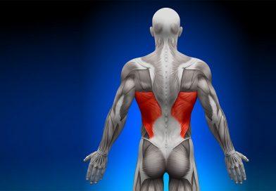 Muscolo Gran Dorsale: anatomia e biomeccanica