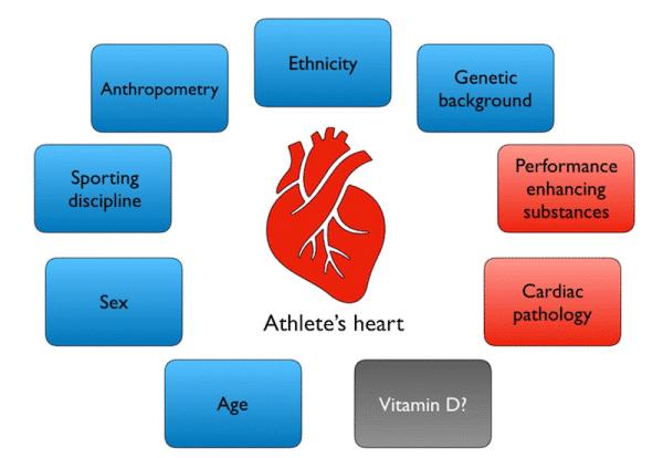 adattamento cardiovascolare esercizio