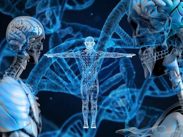 la genetica nella massa muscolare
