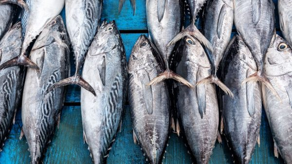 mercurio nel tonno in scatola