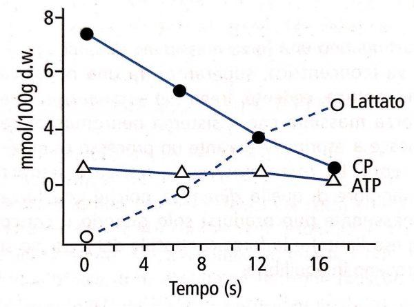 fisiologia del dropset