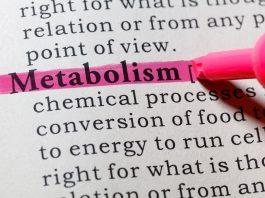 TDEE fabbisogno calorico