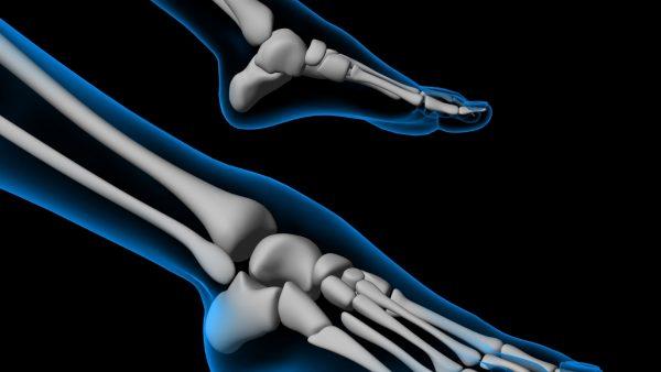 anatomia caviglia