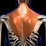 muscolo trapezio